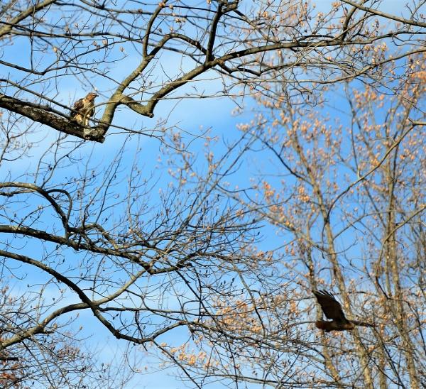 hawks by MTT