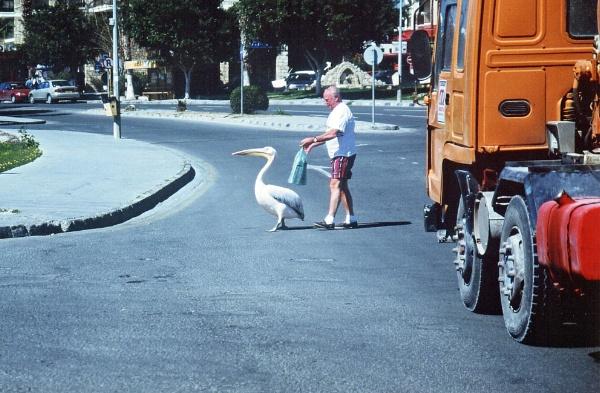 Pelican Crossing by mike9005