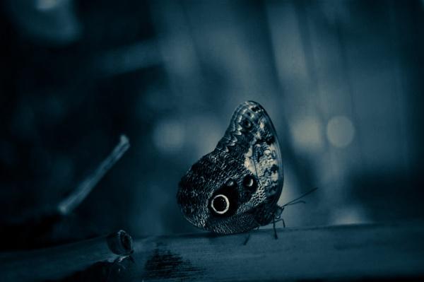 Butterfly by leeandrews18