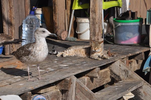 Unusual friendship !! by Chinga
