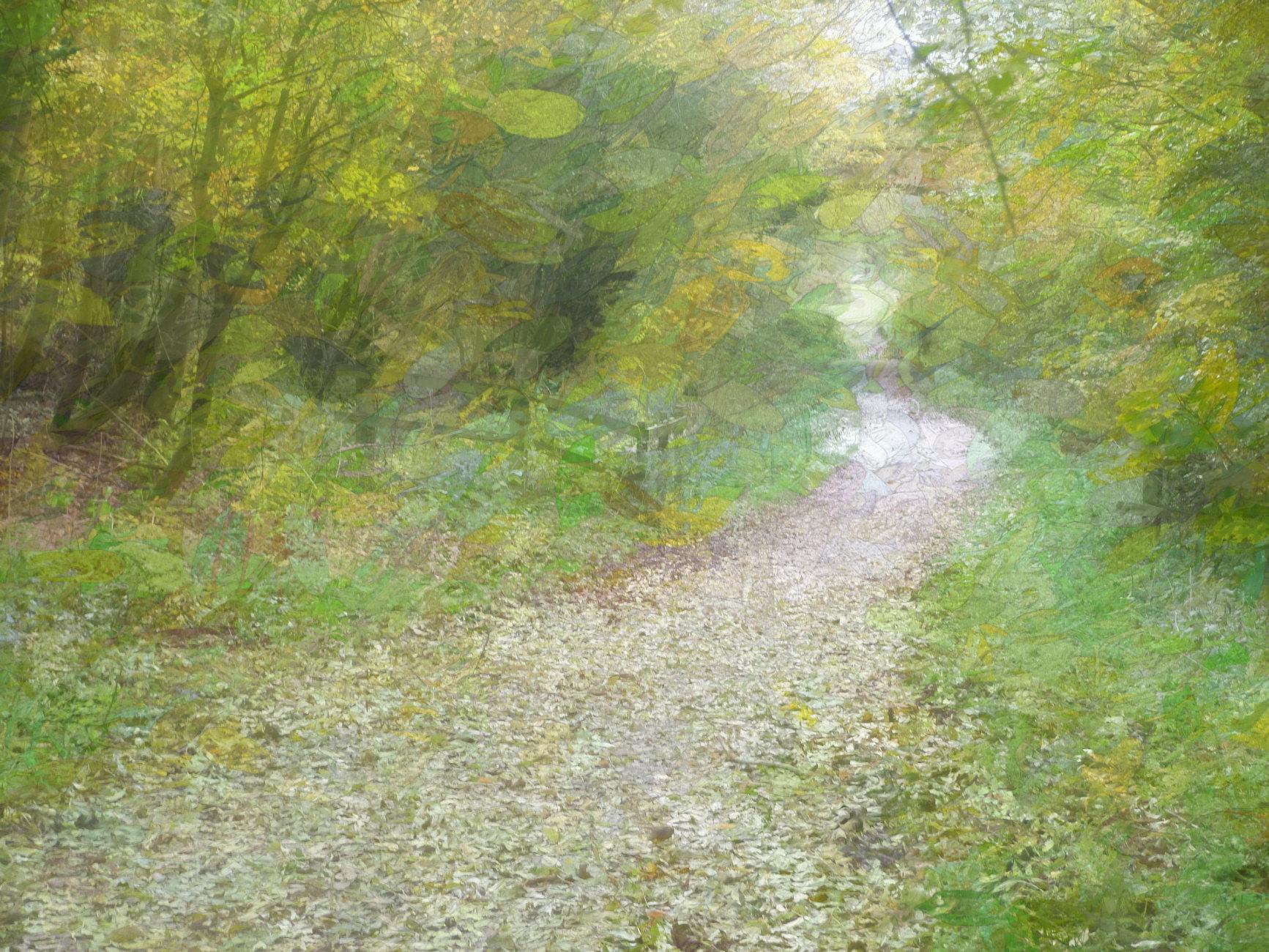 The Rail Trail