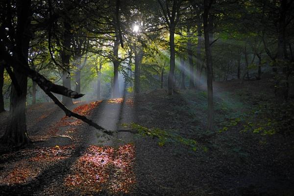 Woodland tree views by robertsnikon