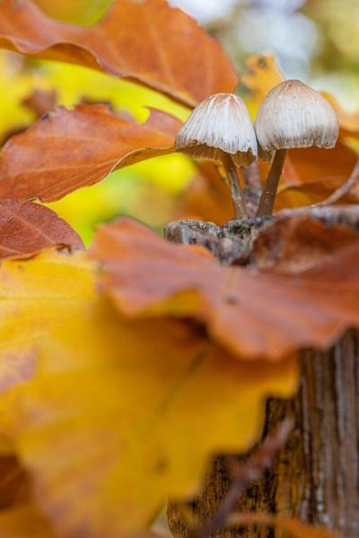 Pilze im Herbst by mongol