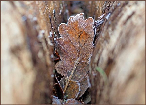 Frozen Leaf Between Wood by kw