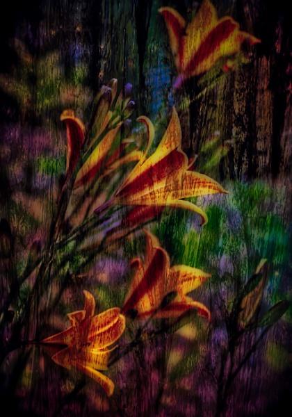 Impressionistic Lillies by adagio
