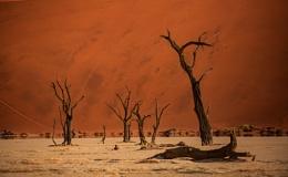 Dead Vlei forest