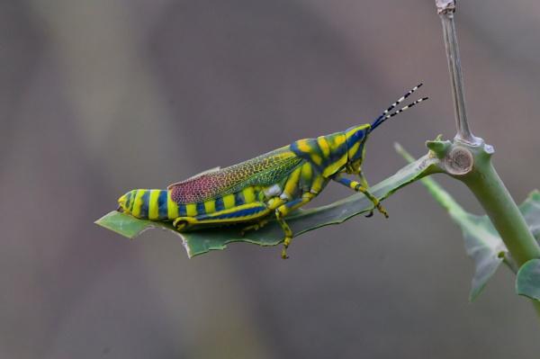 Interacting Nature by ashish88pandey