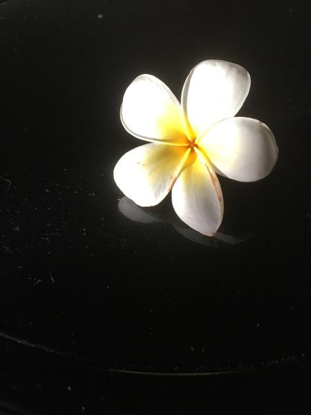 Frangipani Beauty by Ozzie55