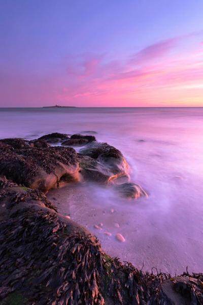 Hauxley Morning. by neil75