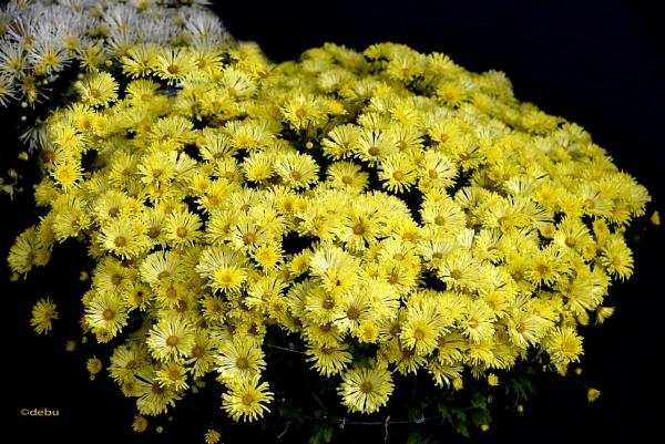 Perfect flowers by debu