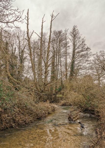 Little River Avon by Kilmas