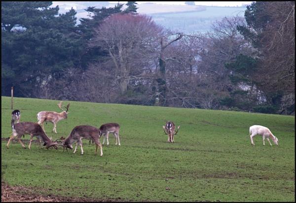 Rutting in Cornwall by JuBarney