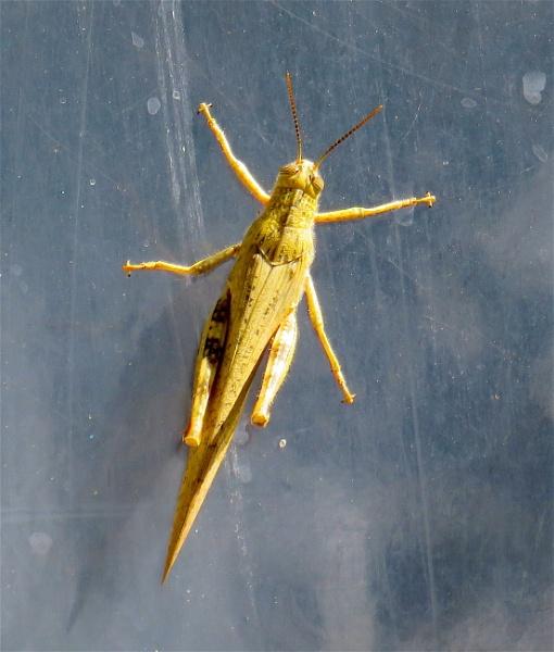 Bug by ddolfelin