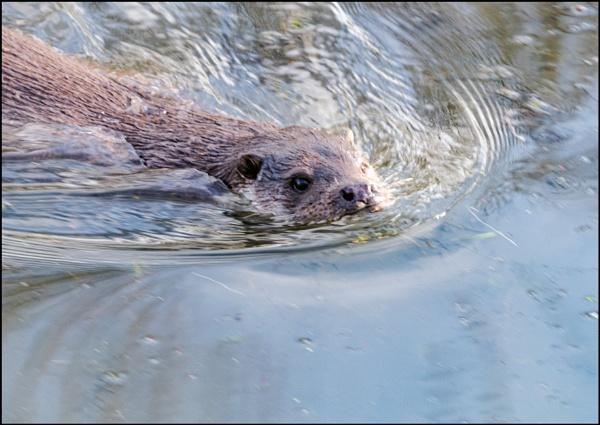 Taking a dip by jimobee