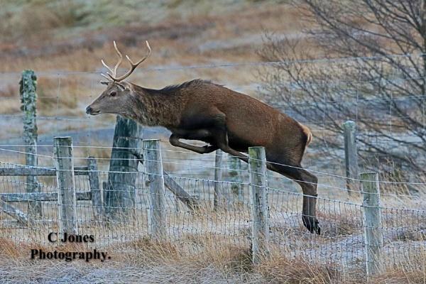 Deer. Last picture of 2019 in scotland by cjones