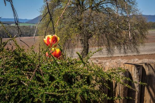 Bridstowe Lavander farm by pax2u2
