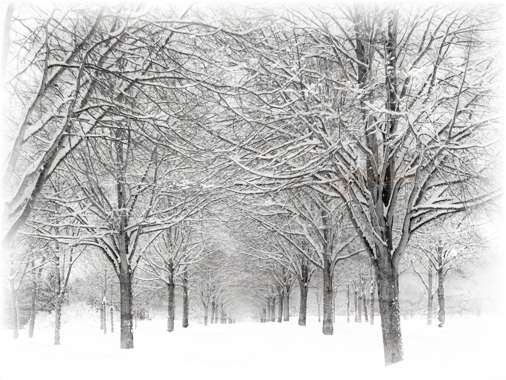 Way Of Snow