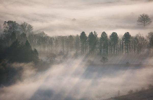 Trees, Mist, Light by martin.w