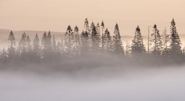 Callander Pines by PaulHolloway