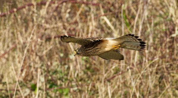 In flight by roge21