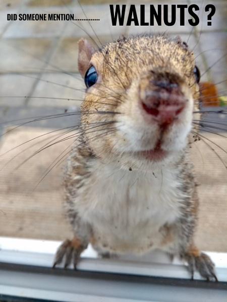 Nosey Squirrel by Craigie10
