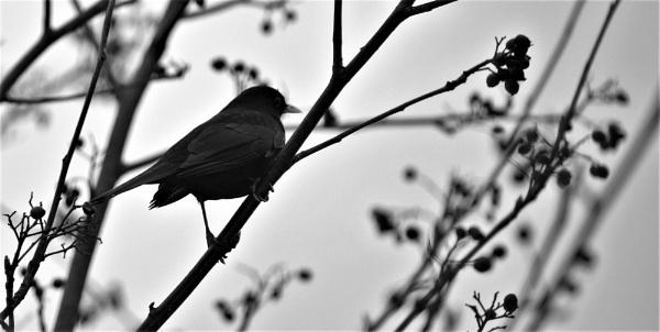 blackbird by MTT