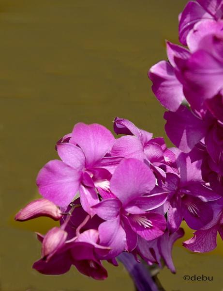 MY Lovely Flower by debu