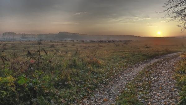 Legelőn by wacrizphoto