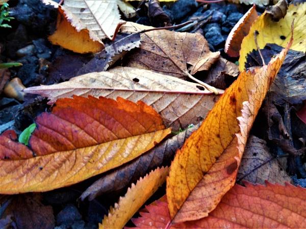 golden leaves by jenny007