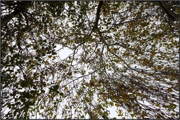leaf canopy by FabioKeiner