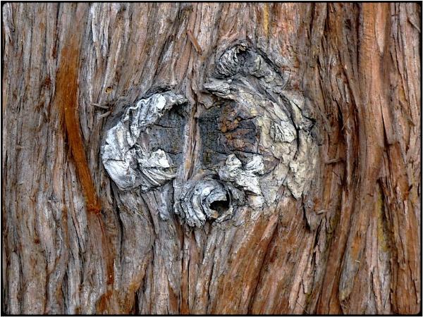 barkfaces (1) by FabioKeiner