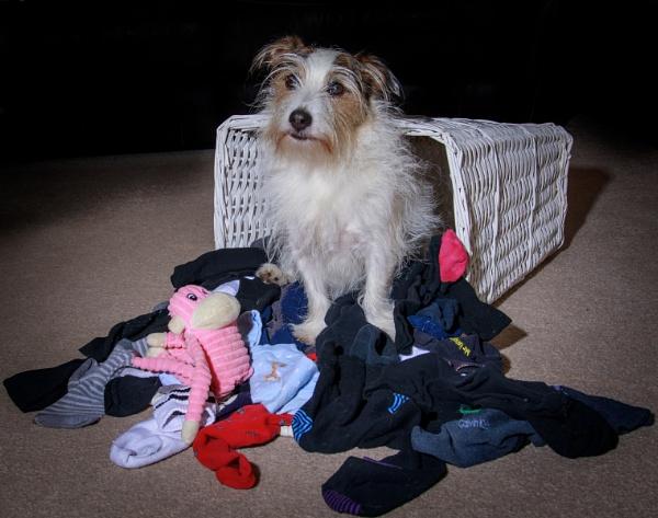 The dogs basket by Stevetheroofer