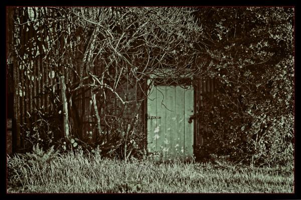 Old shed door by pax2u2