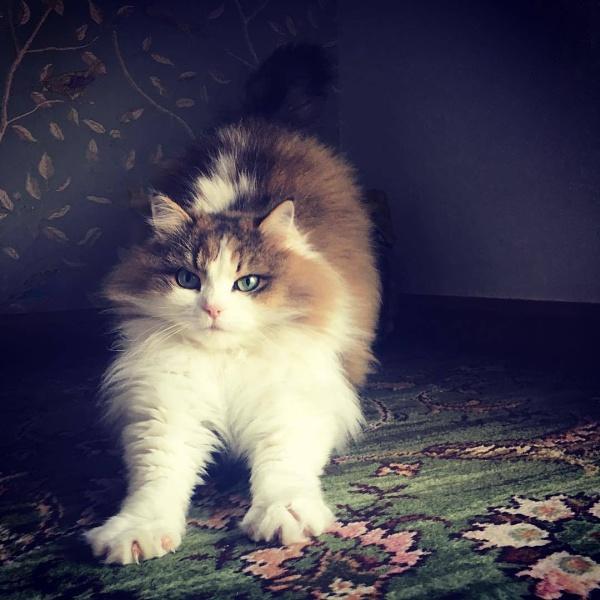 Cleo-Ann by LadyRaisa