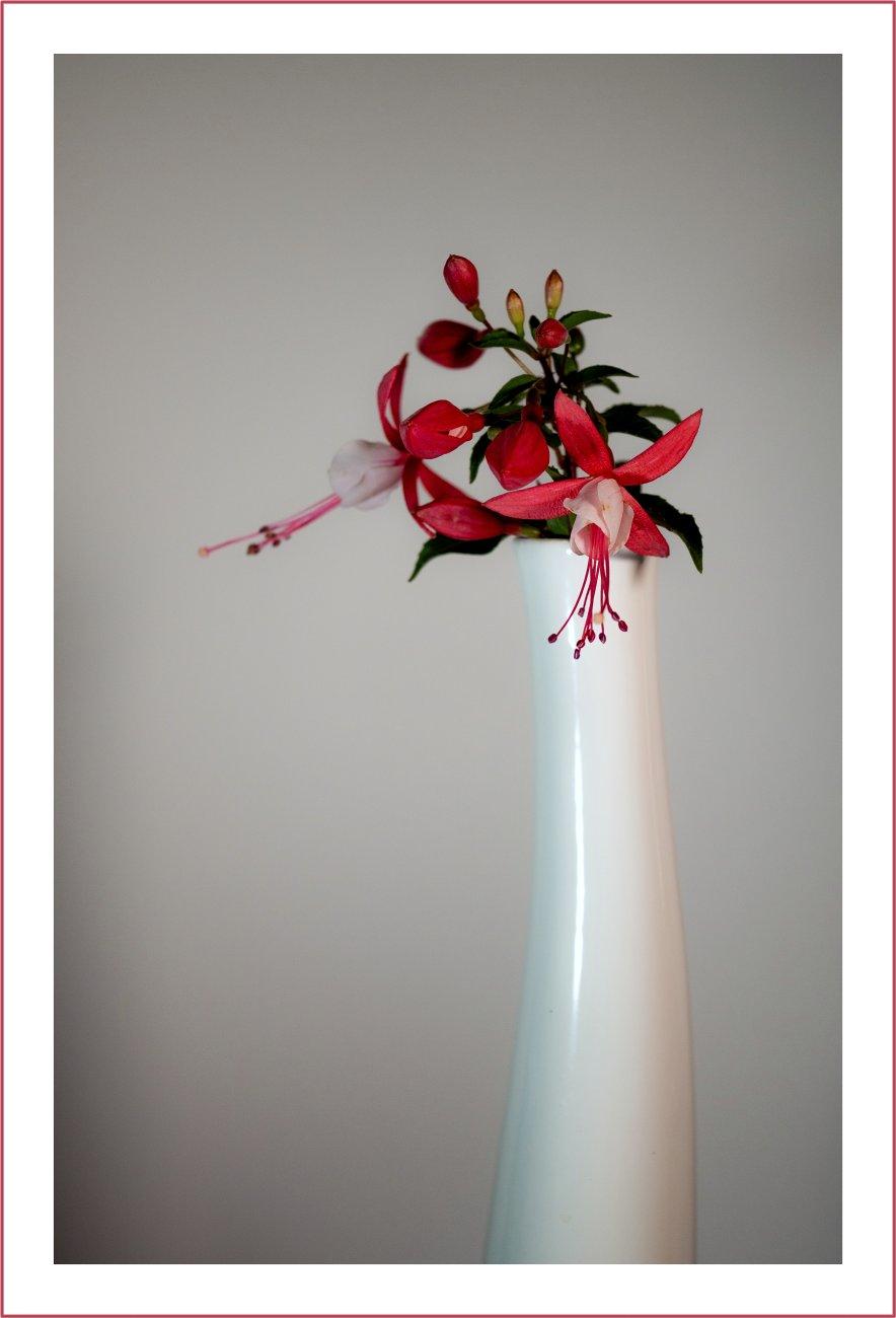 Vase With Fuchsia