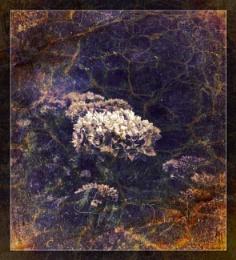 A Flowery Flourish