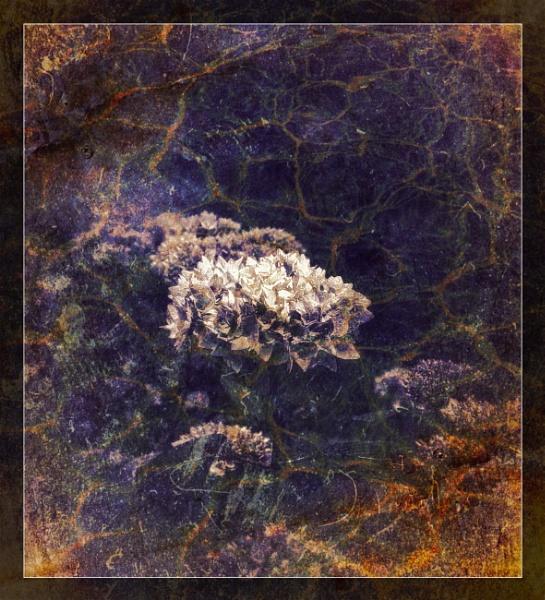A Flowery Flourish by adagio