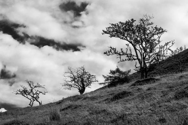 Three Trees by cjhowland