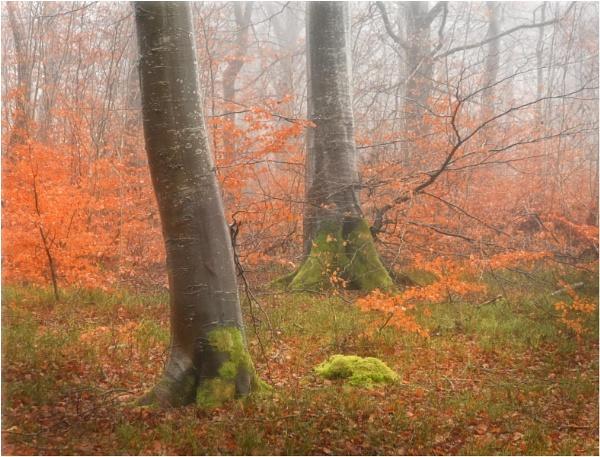 December Mist by MalcolmM