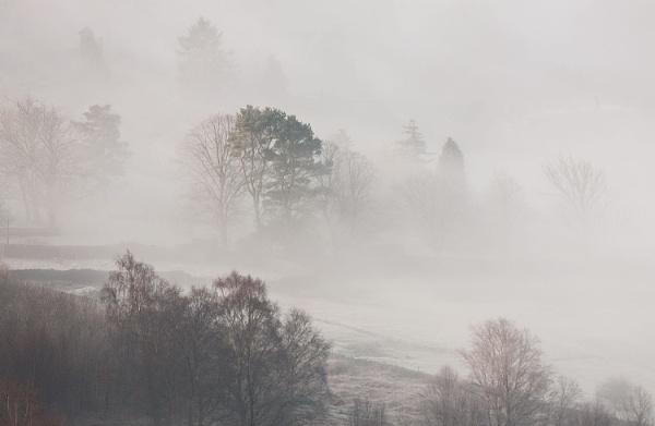 Misty Morn by martin.w