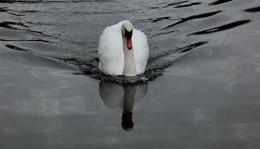 Pristine Reflection