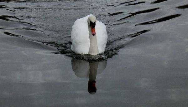 Pristine Reflection by SUE118