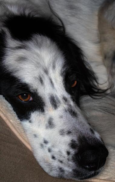 Dog Tired by Merlin_k