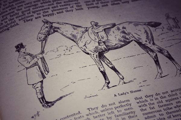 A LadyÂ's Hunter by Merlin_k