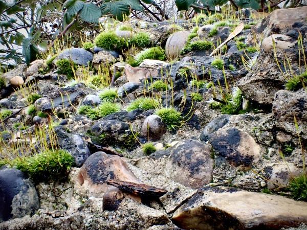 Moss by nclark