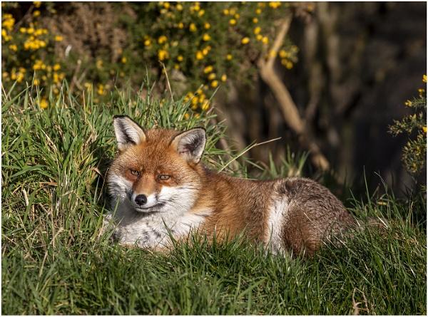 Enjoying the sun by Lillian
