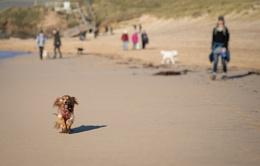 Dog walk on the beach...