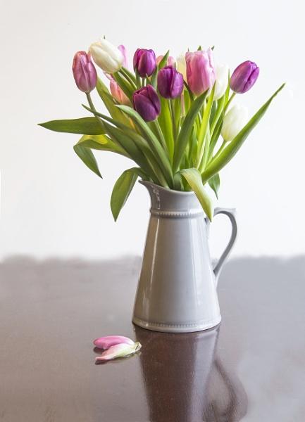 Tulip Fever by Irishkate