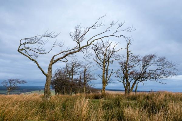 A Windy Spot by mbradley