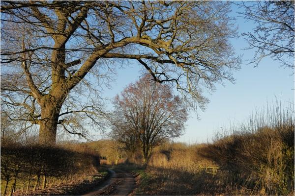 Wintry Lane 1 by dark_lord